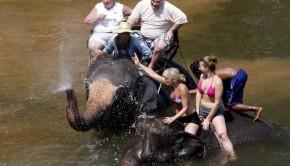 Comercio elefantes Birmania I