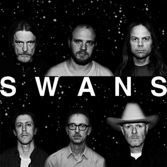 swans foto 3