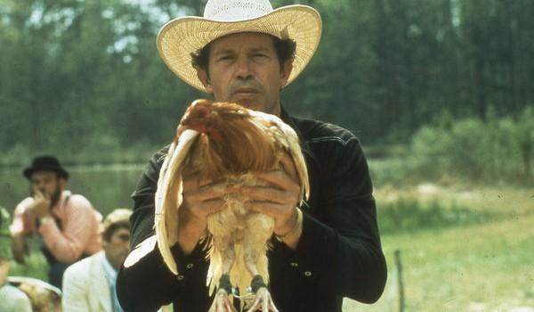 gallo de pelea 1