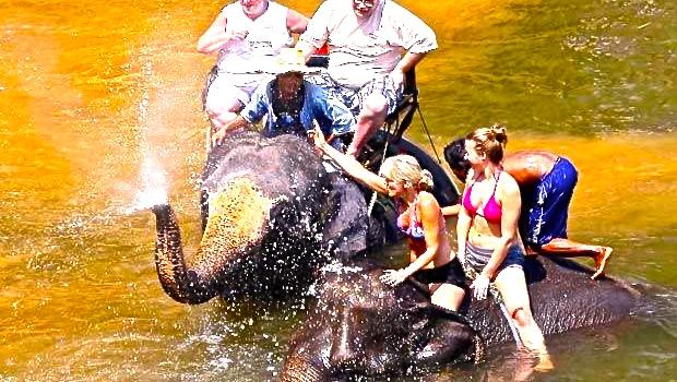 Comercio-elefantes-Birmania-I-620x350 3